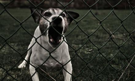 A láncon való kutyatartásról...