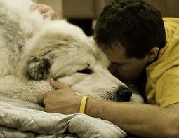 Mit érdemes tudni a kutyák epilepsziájáról?