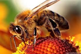 Méhészeti akció