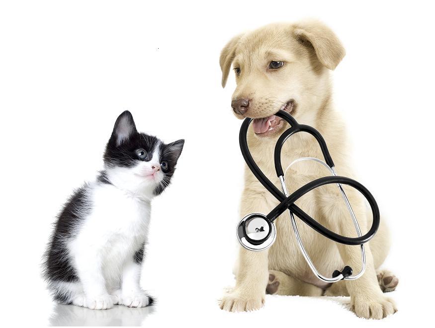 Állatorvosi ügyelet