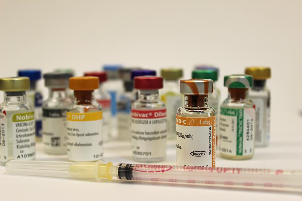 Kutyák és macskák immunizálása fertőző betegségekkel szemben